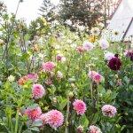 Behind The Scenes Cut Flower Garden Sunset Magazine