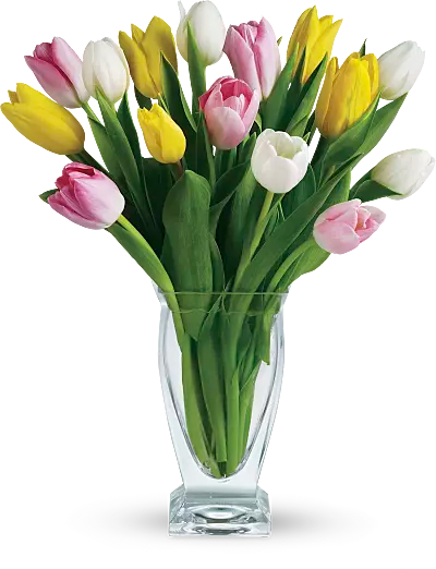 Symbolic Meaning of the Tulip   Teleflora Shop for Tulips