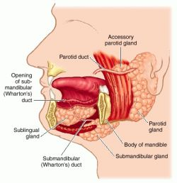 Gland | definition of gland by Medical dictionary
