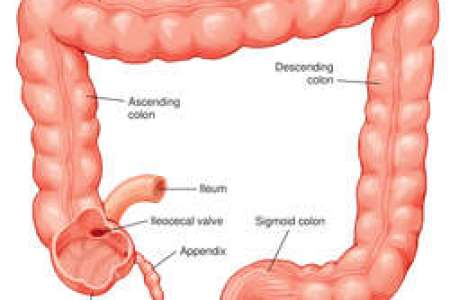Section Of Ileum And Transverse Colon Full Hd Pictures 4k Ultra