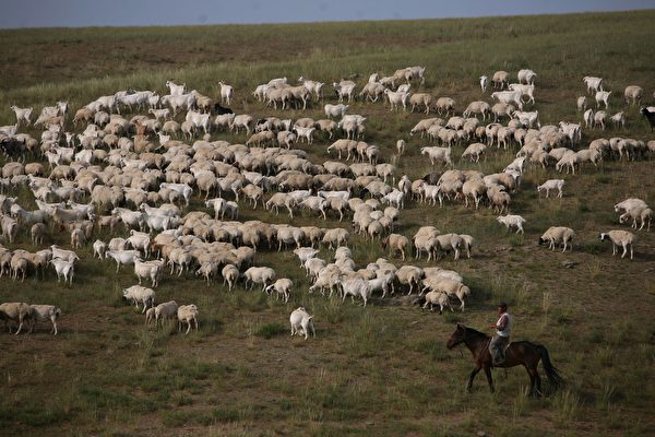 Brucellosis Outbreak in China Worsening as Disease Spreads to Farms