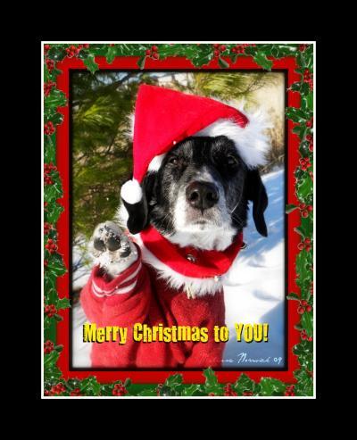 Caption Ideas For Christmas Cards ThriftyFun