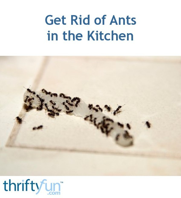 getting rid of ants in the kitchen