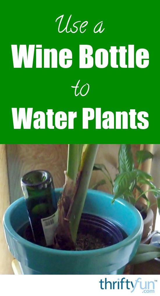 Types Indoor Water Plants
