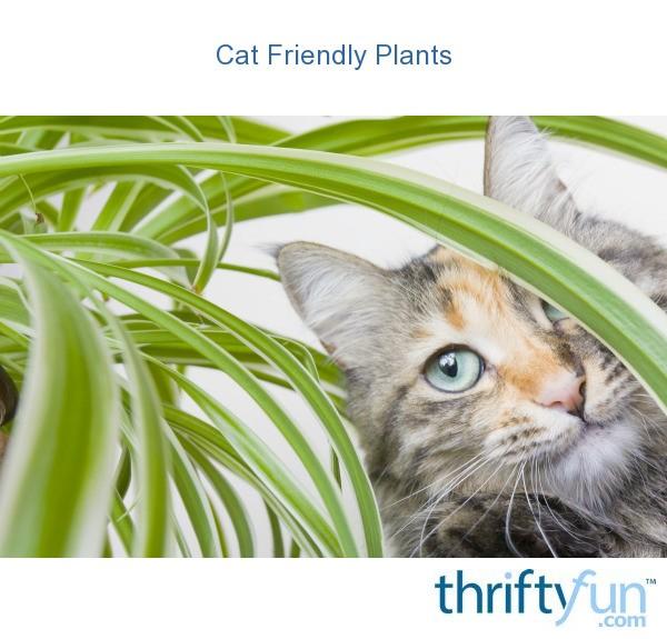 Cat Friendly Plants ThriftyFun