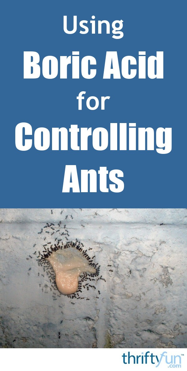 Get Rid Of Ants Fast The Non Toxic Way Pinterest Image Of