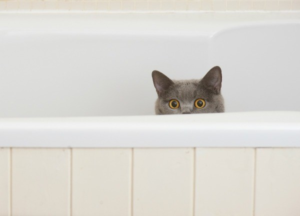 Cat Pooping In Bathtub ThriftyFun