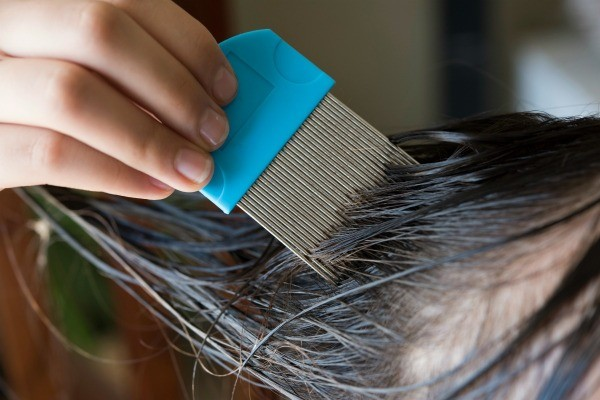 Natural Remedies For Head Lice ThriftyFun