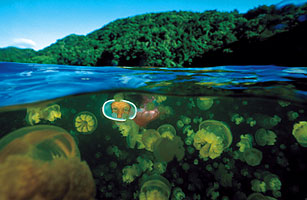 Diversions: Swimming with the Fishes in Palau