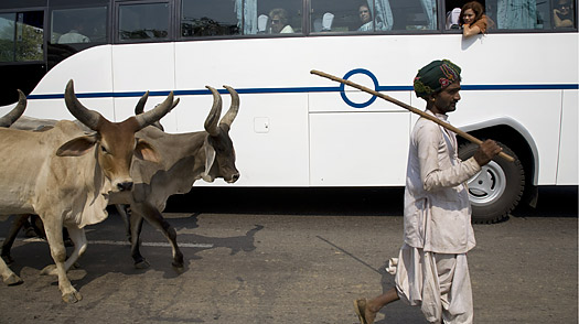 Cows With Gas: Indias Contribution to Global Warming