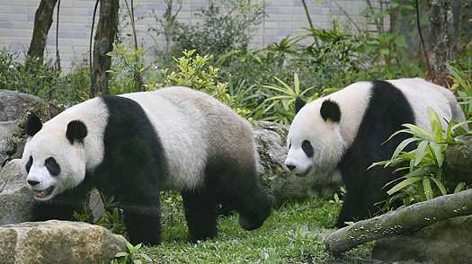 Fake Pandas! And Other April Fools Day Hoaxes