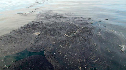 Arctic Mystery: Identifying the Great Blob of Alaska