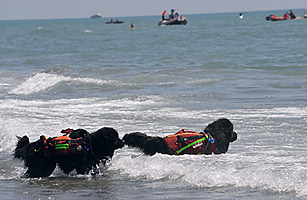 Hairy Heroes: Canine Lifeguards Hit Italys Beaches