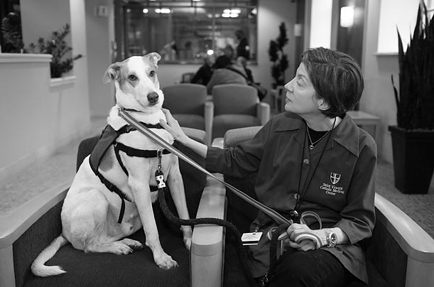 Louis is a gentle giant, a wonderful, compassionate therapy dog. He works at St. Vincents Catholic Medical Center in Manhattan, the hospital that pioneered the first therapy-dog program in New York City
