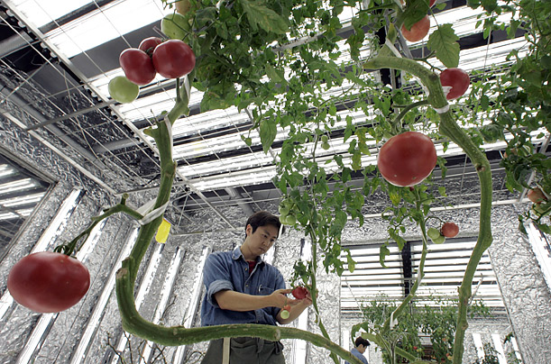An UNDERGROUND Farm in Tokyo, Courtesy of Time.com
