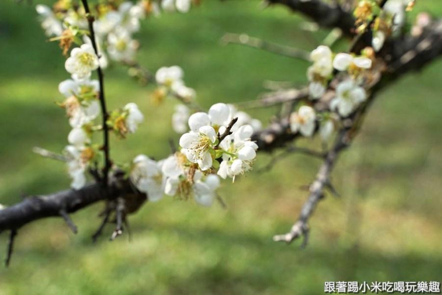 2020新竹清華大學梅園梅花開了!把握機會快去賞梅吧~(含路線圖及周邊美食懶人包)–踢小米遊樂