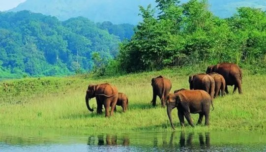 Image result for Koyna Wildlife Sanctuary – For An Encounter With The Wild