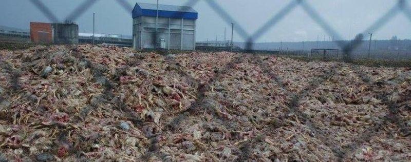 Картинки по запросу пташиний могильник на київщині фото