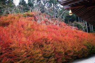 [自助旅行] 九州福岡,吞山觀音寺紅葉