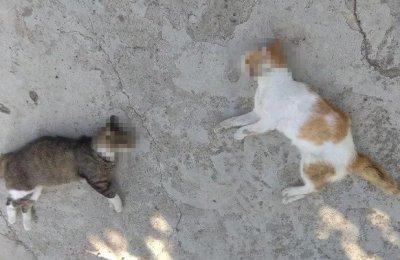 Edirne'de kedi ve köpek ölümlerinin nedeni belli oldu