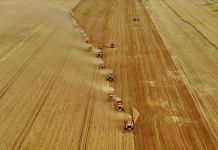 Buğday, arpa ve mısır ithalatında gümrük vergisi geçici olarak sıfırlandı