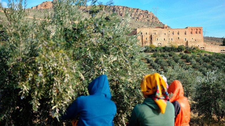 1609491246 712 tarihi manastirda yetistirilen zeytinler odullu zeytinyagina donusuyor
