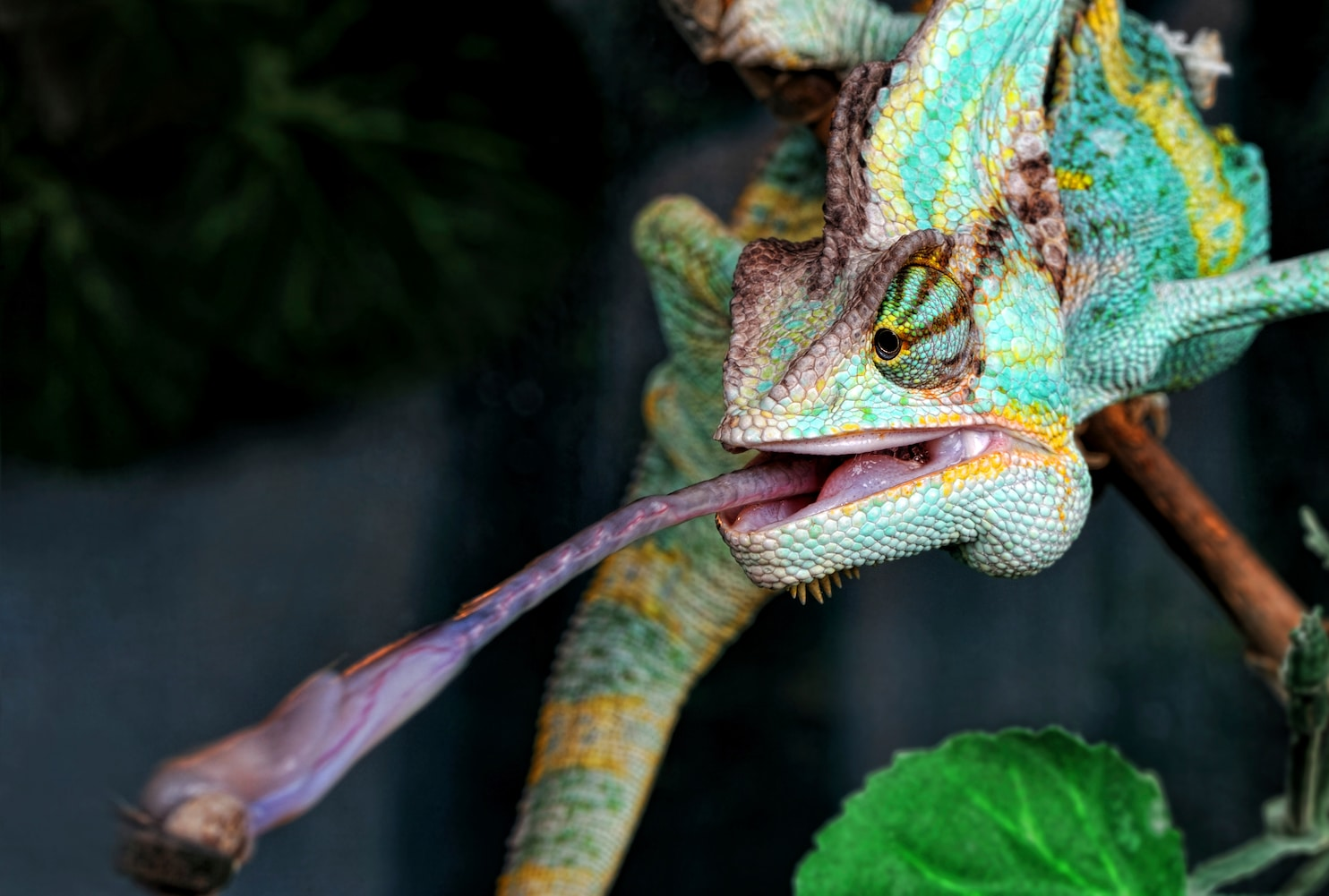 Ever Wondered About Warm Blooded And Cold Blooded Animals