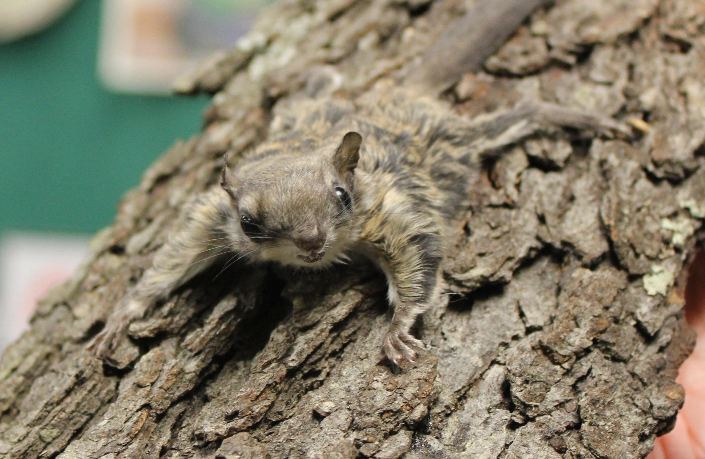 Squirrel And Acorns Ground