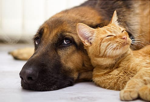 Image result for free stock images of a dog and cat sad face