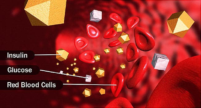 insulin and glucose in bloodstream