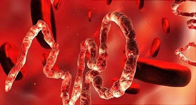 ebola in bloodstream