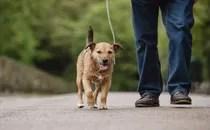 photo of man walking dog
