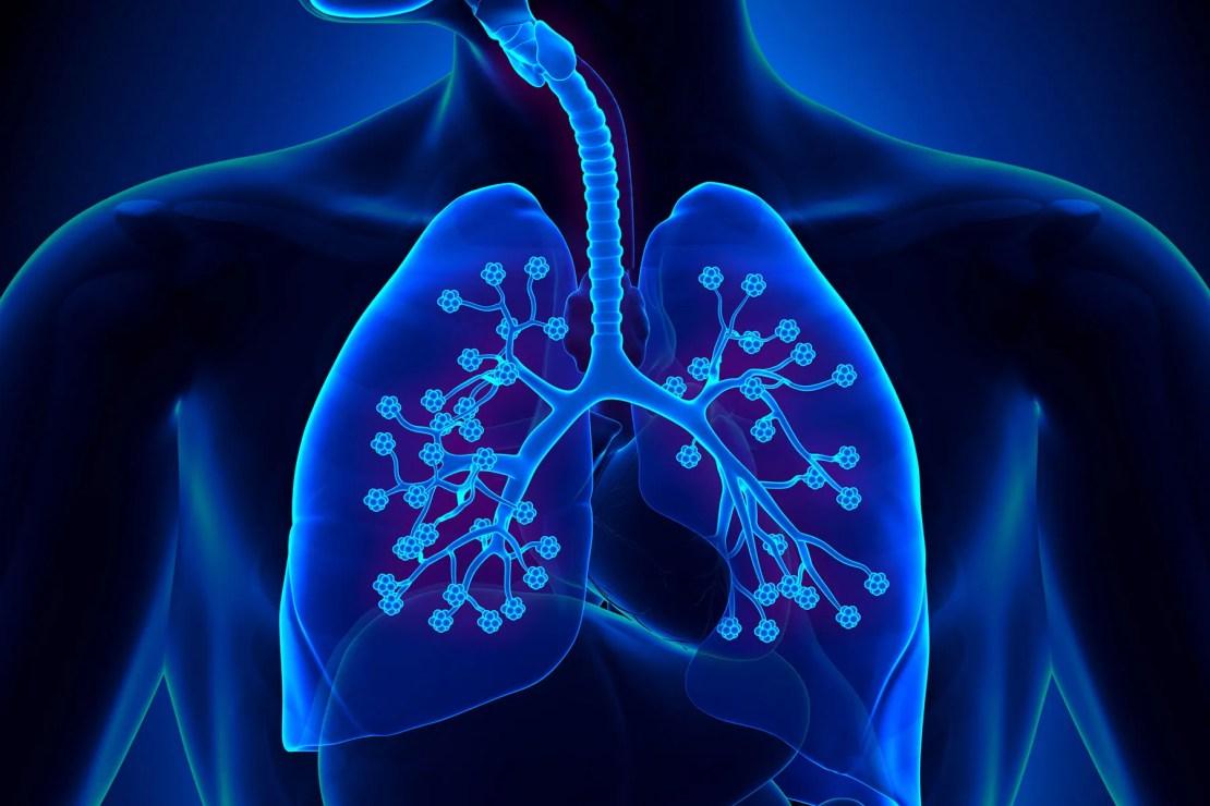 lungs anatomy detailed alveoli