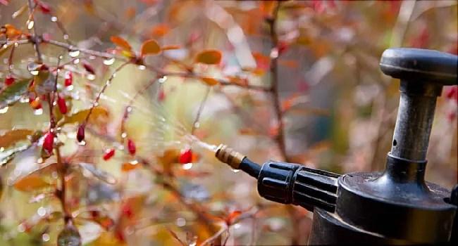 pesticide being sprayed onto plants