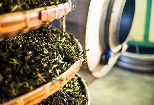 tea leaves being air dried