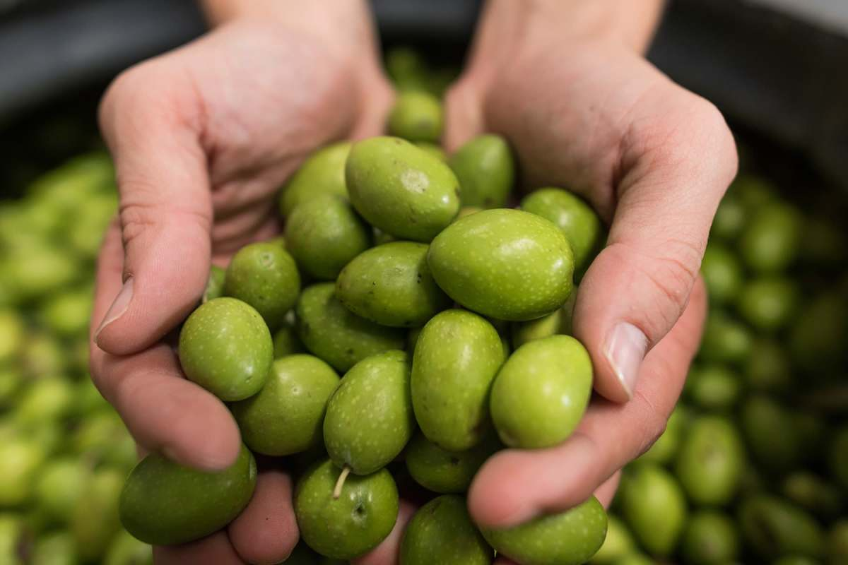 photo of hands holding olives