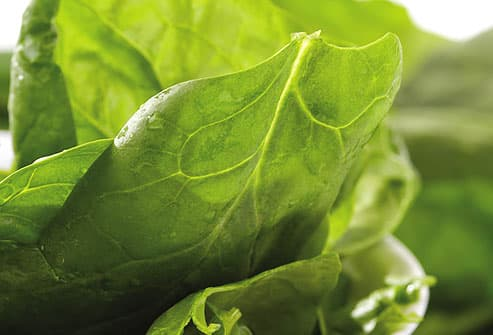 Fresh Spinach Leaves in Bowl