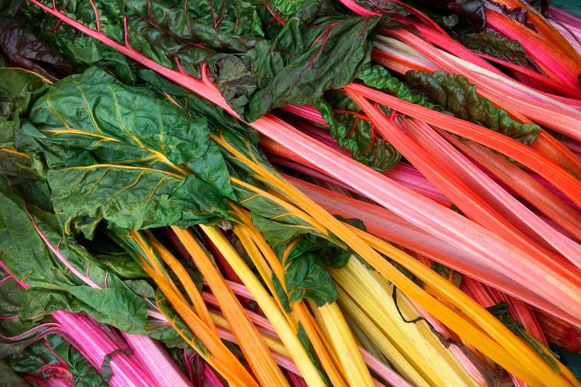 colorful chard