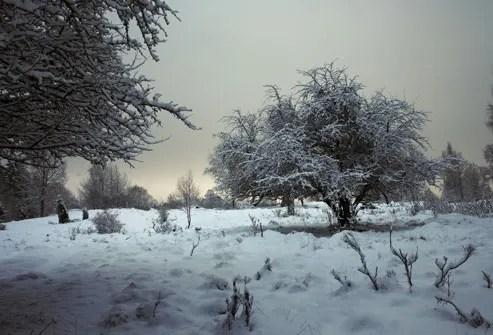 Snow Covered Swedish Landscape