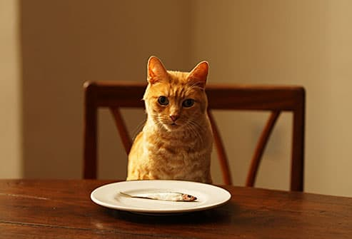 Image result for Cats and the Human Food They Shouldn't Eat