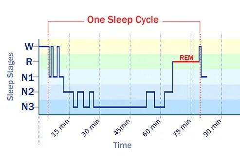 sleep cycle graph