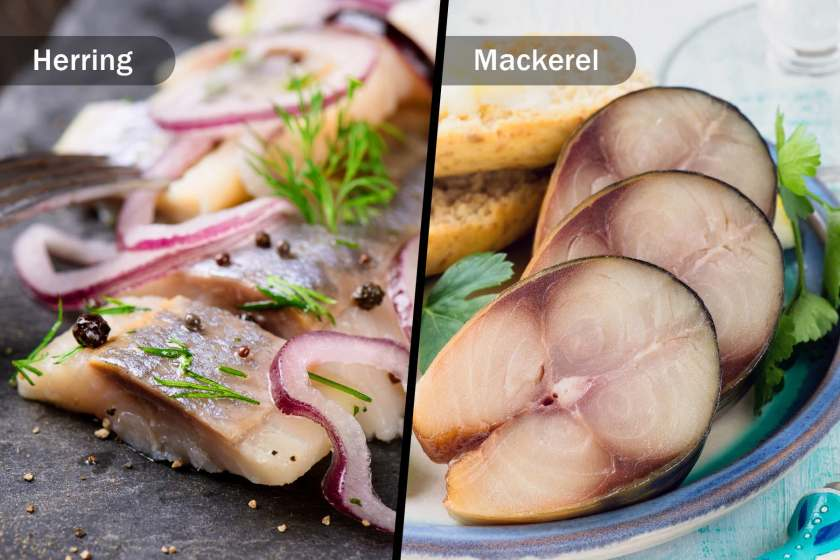herring and mackerel diptych