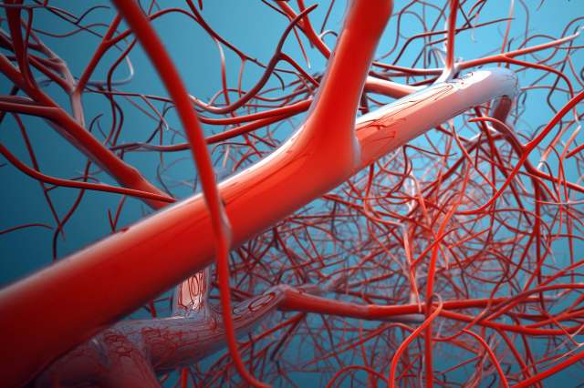 photo of blood vessels