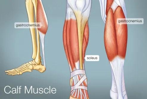 Anatomy Chart Muscular Workouts