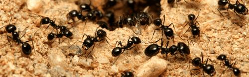 Wasp removal tsawwassen
