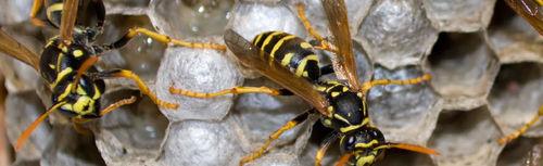 Ants control tsawwassen