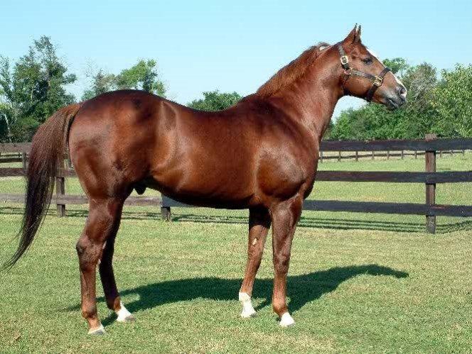 Resultado de imagen para caballos cuarto de milla en venta