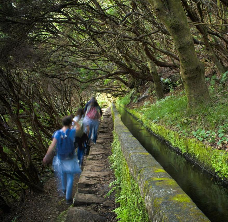 Madeira has wonderful hiking trails - they also lead through old laurel forests