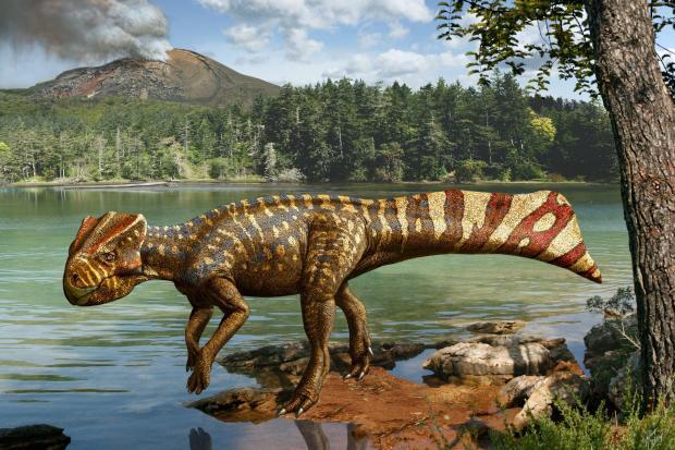 """<br /><br /> Klimaveränderungen nach Vulkanausbrüchen könnten Dinosaurier geschwächt haben. Der Einschlag des Asteroiden habe ihnen """"dann den Rest gegeben"""", sagen Forscher<br /><br />"""