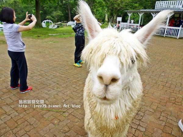 桃園親子遊樂必去景點有草尼瑪的戶外動物園區,還有美麗教堂提供新人拍照!//情侶//親子//婚紗//偶像劇